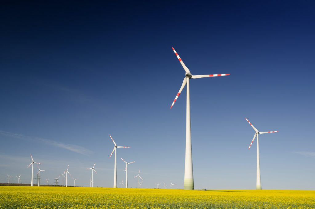 a yellow field dotted with wind turbines one method for the UK to reach net zero carbon